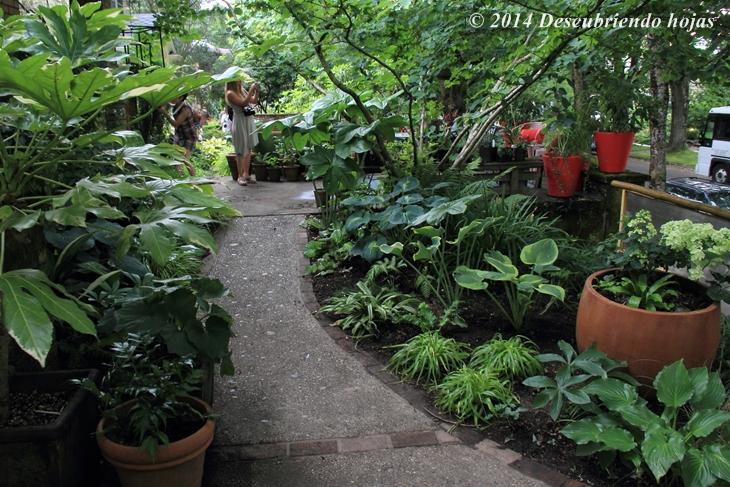Descubriendo hojas el jard n de joanne fuller gbfling14 - Plantas de sombra para jardin ...