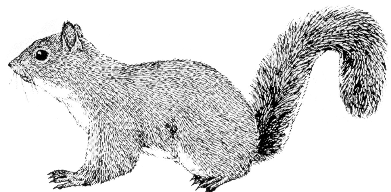 Selective image for printable squirrel target