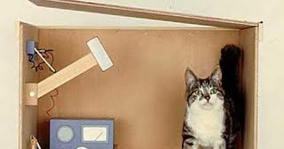 Schrodinger S Cat For Dummies