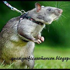 Tengo ratones en casa good with tengo ratones en casa - Como eliminar ratas en casa ...