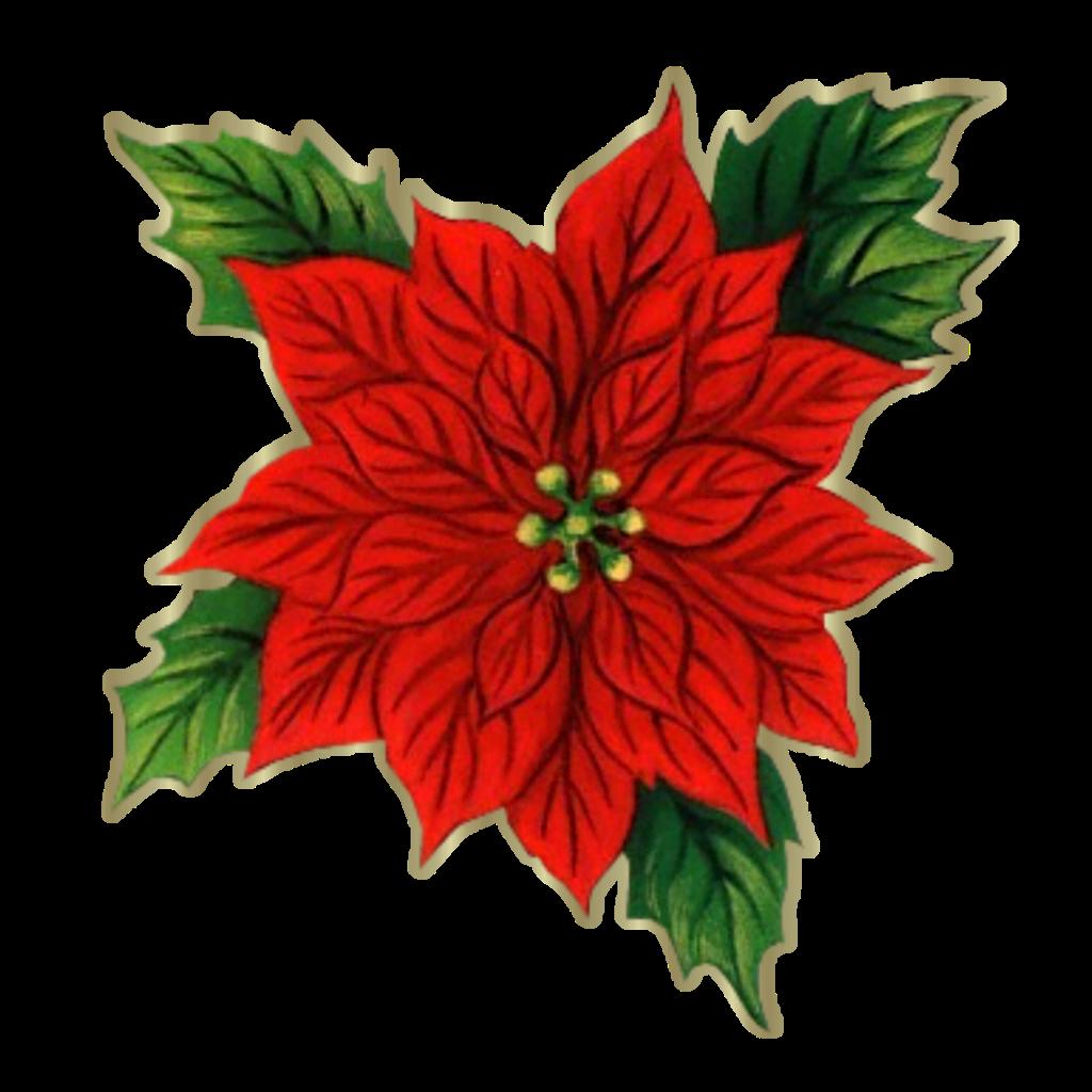 Flor de navidad imagui - Imagenes flores de navidad ...