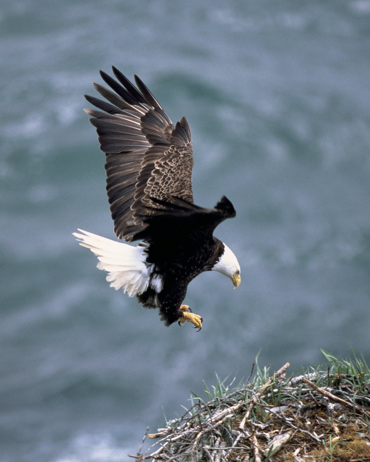 the eagle landing by - photo #44