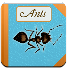 external image Ants.png