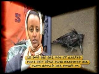 Ortodox Church Miracel Memhir Girma | PC Web Zone | Pc World News