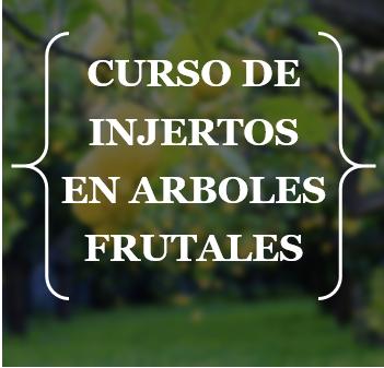 CURSO DE INJERTOS EN ÁRBOLES FRUTALES CLIC EN LA FOTO PARA VER TODA LA INFORMACIÓN