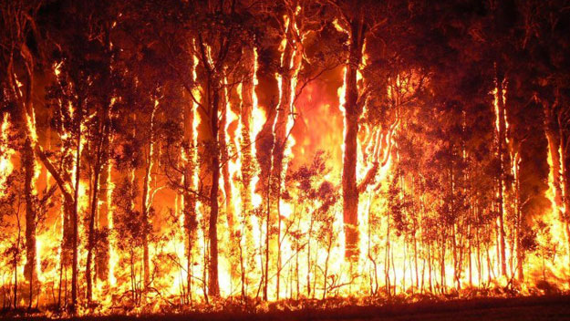 bushfire, jungle, vradhgram