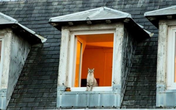 chats paris toits