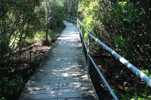 Boardwalk through Carawah Reserve