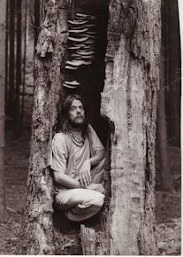 Im Innern des Baumes