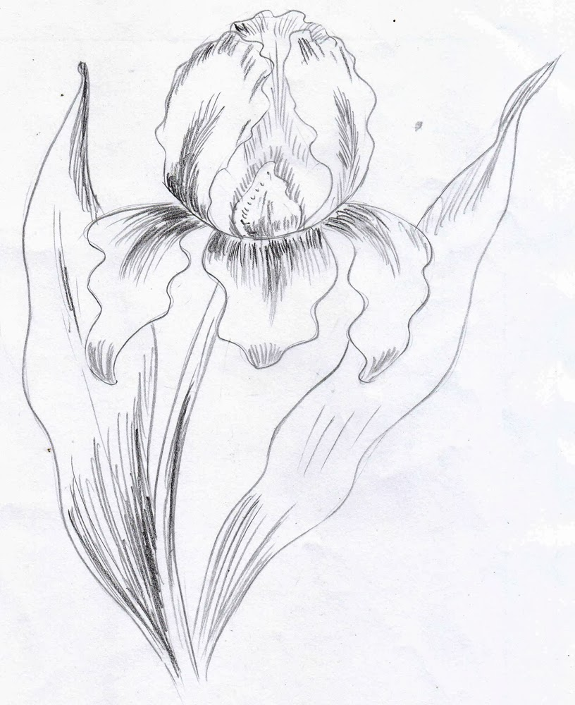 Weekly doodles and tuts how to draw an iris method 4 how to draw an iris method 4 izmirmasajfo