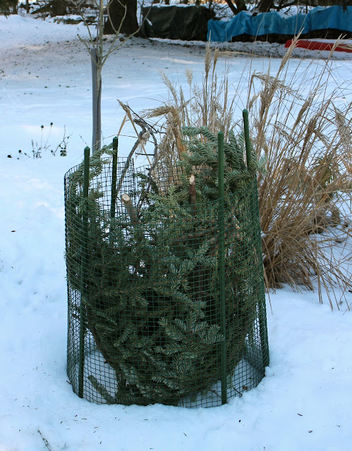 Winter plant protection -- The Impatient Gardener