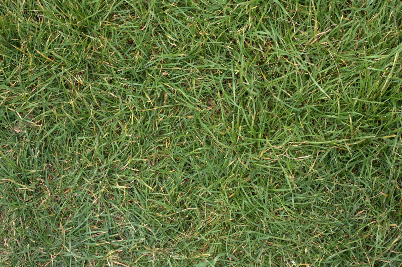 (GRASS 2) turf lawn green ground field texture