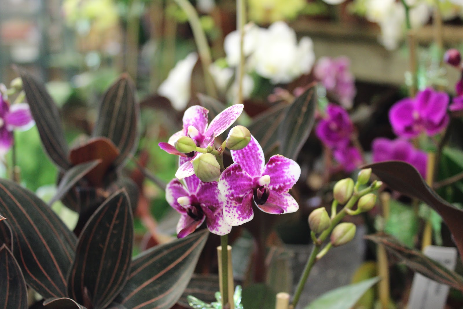 Painting the hamptons orchid remedy for the common cold for Lynch s garden center