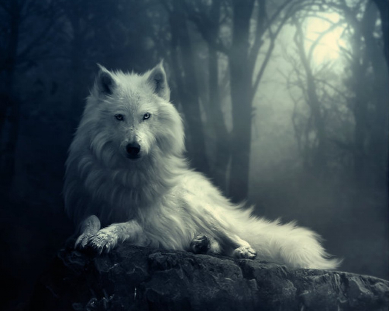 http://2.bp.blogspot.com/-h6FfHgAJ4ok/UBvC-B8ws8I/AAAAAAAAAFg/s66it9CBwk0/s1600/651807-1280x1024-wolf-in-the-dark.jpg