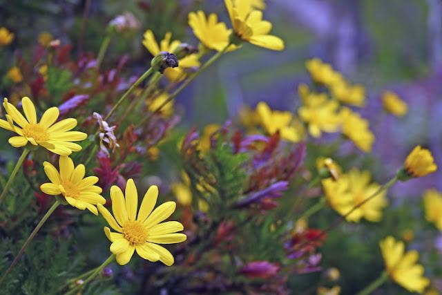 صور زهور وأشجار الربيع 2012