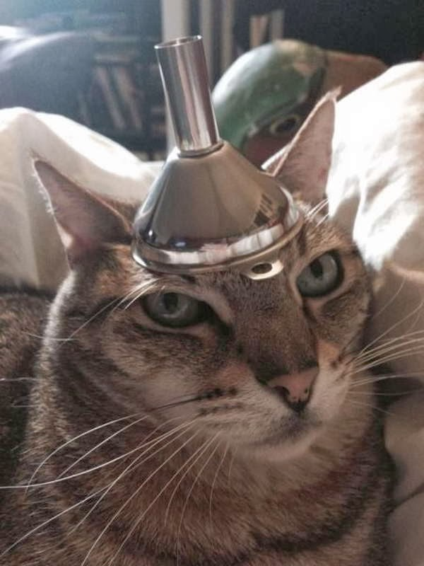 Funny cats - part 78 (35 pics + 10 gifs), cat pics, cat with stuff on his head