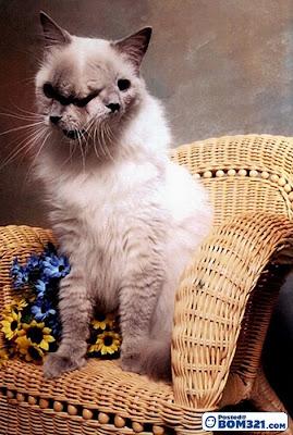 Frankenlouie, Kucing 2 Muka Yang Bertuah