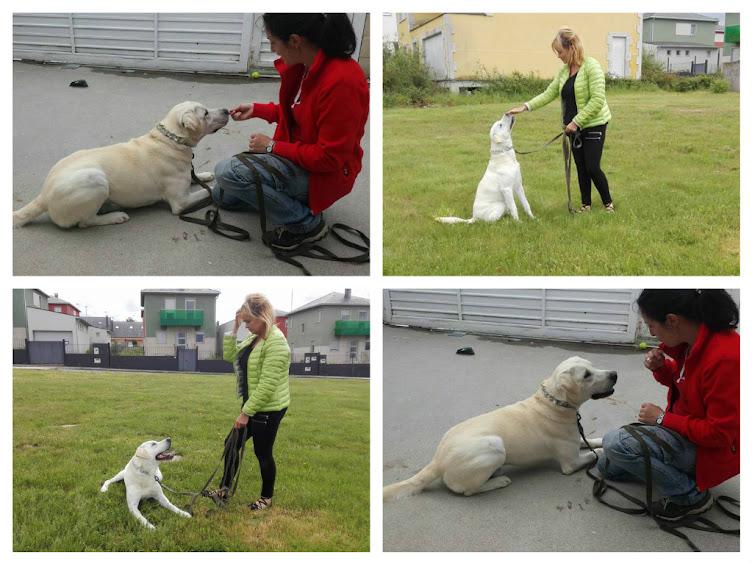 Elena y Enzo 10 meses , calma y obediencia básica.