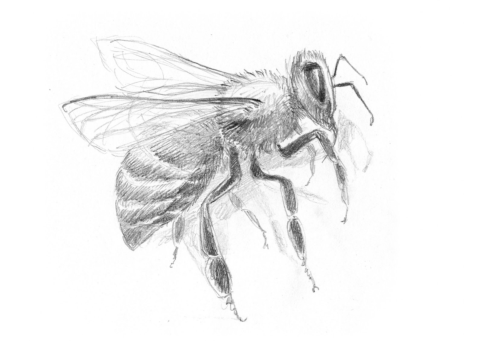 animal and insect drawings 3 2014 dirk parijs work