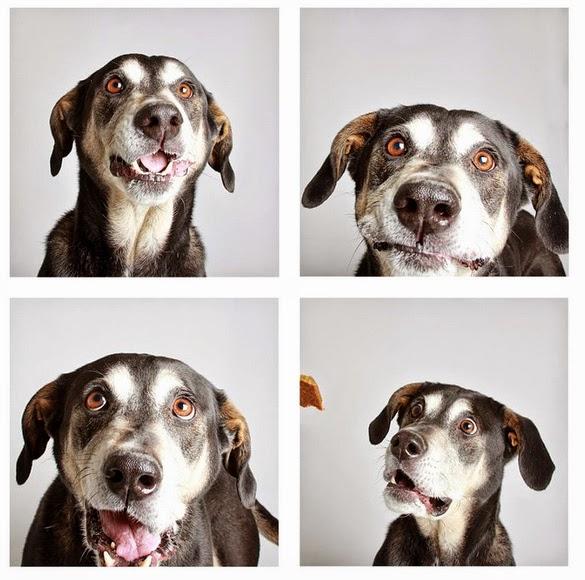 Картинки по запросу В приюте делают забавные фотографии собак, чтобы те могли быстрее найти себе новый дом