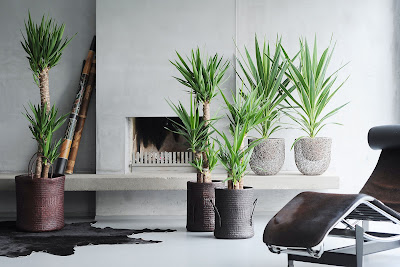 planta marzo