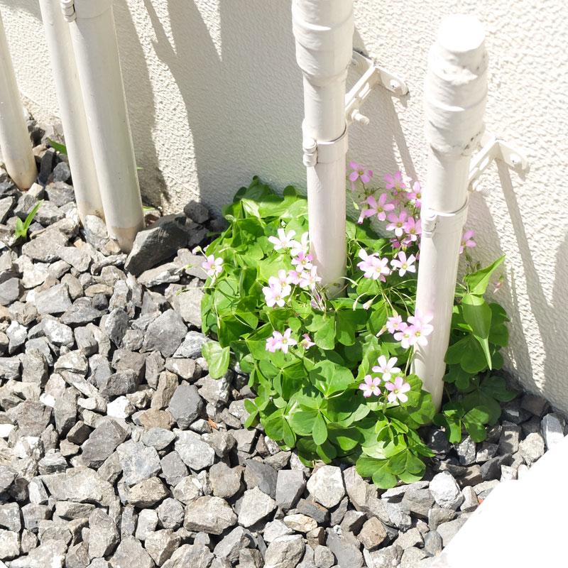 原宿に咲いた花の写真