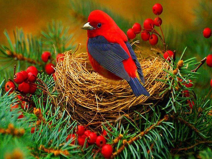red bird nest and - photo #14