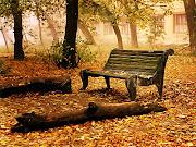Color de otoño oto banco vac do