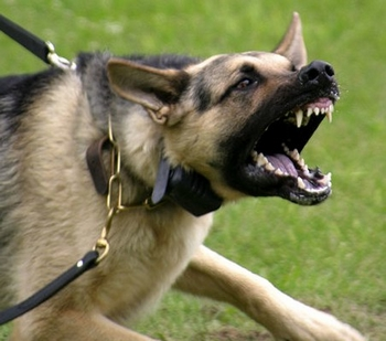 Top 10 most dangerous dogs in the world 2012