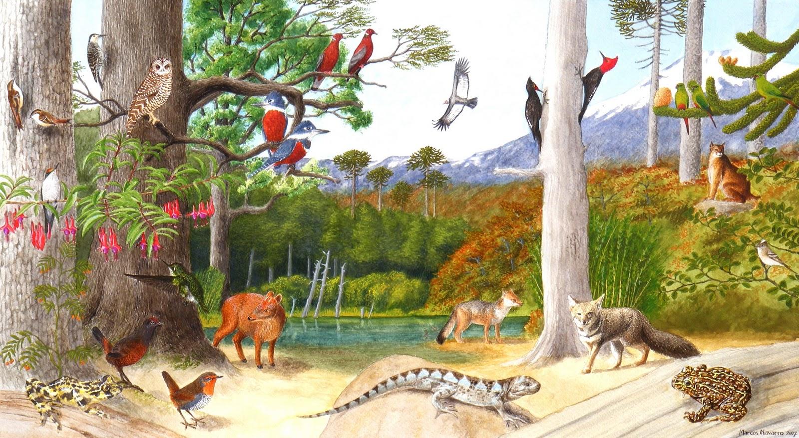 Resultado de imagen para fauna chilena para niños