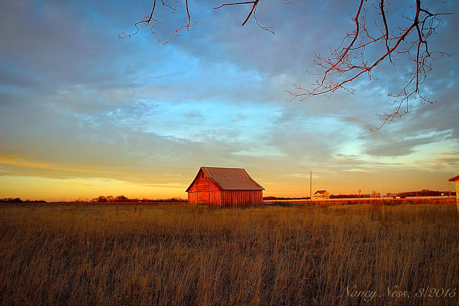 ALONE ON THE PRAIRIE, photo by Nancy Ness, 4\2015