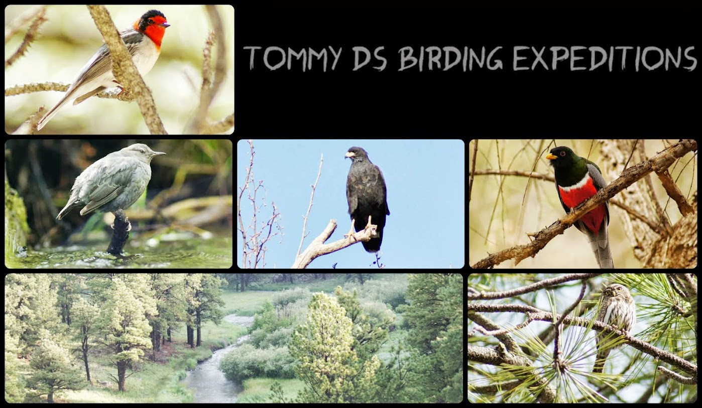 Tommy D's Birding Expeditions