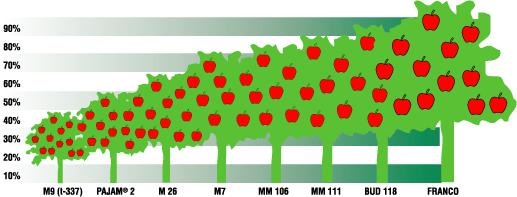 El jard n de la alegr a rboles frutales consideraciones for Factores para seleccionar el terreno para el vivero