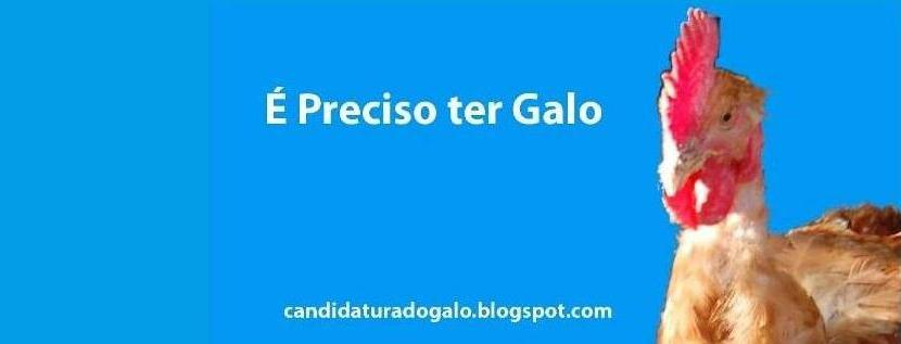 candidatura do galo