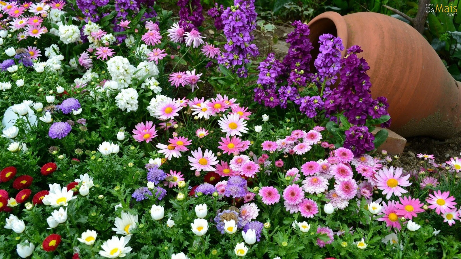 http://2.bp.blogspot.com/-h93zYGifw_Y/URJ-Qa5rMOI/AAAAAAAABB0/Ia5JbdIdonA/s1600/flores-coloridas-wallpaper.jpg