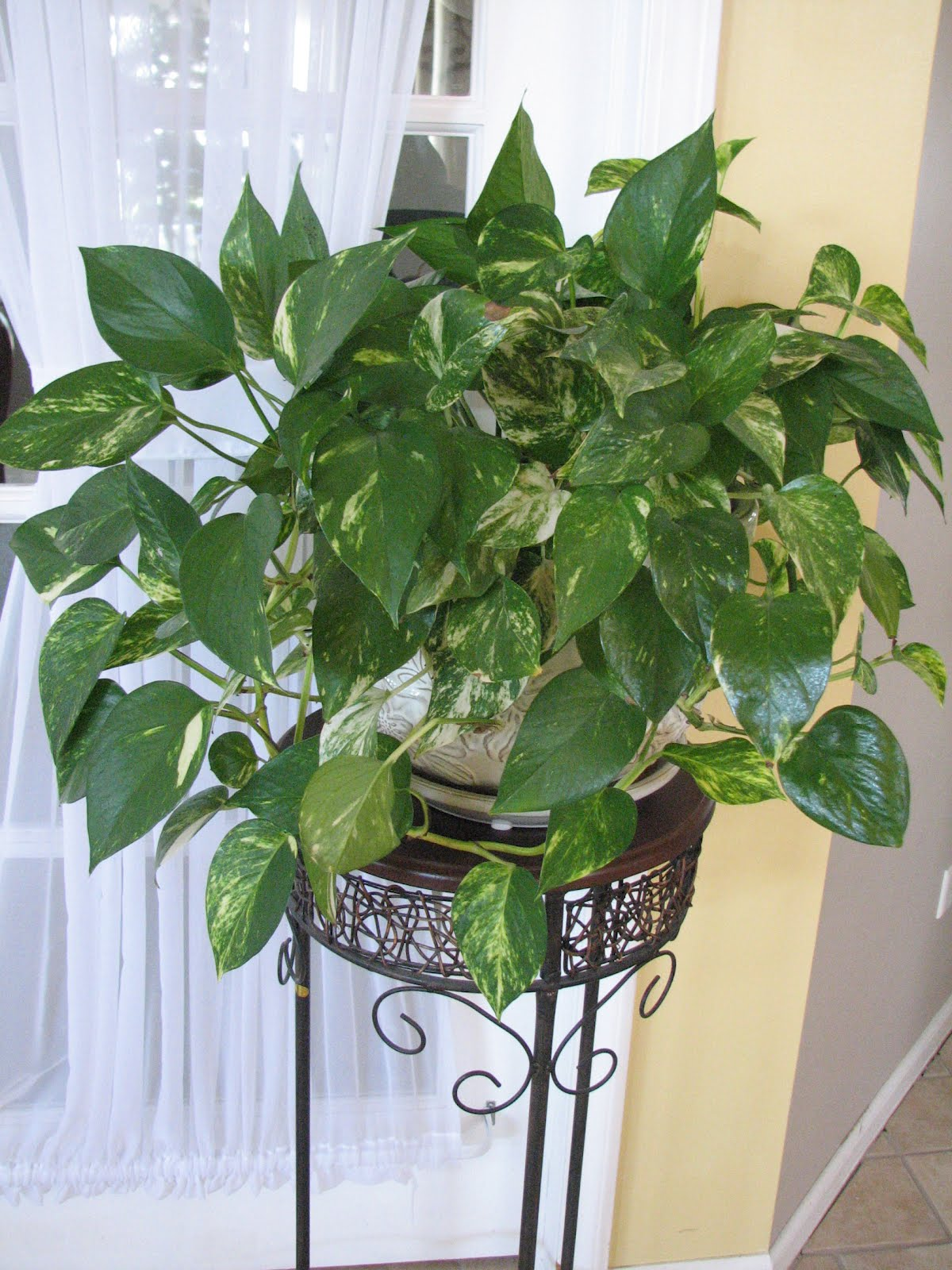 Indoor Plants That Don T Need Sunlight 100 Indoor Plants
