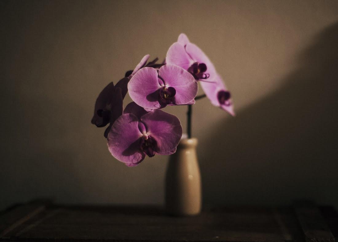 Sweet Bird of Youth flowers by night ii
