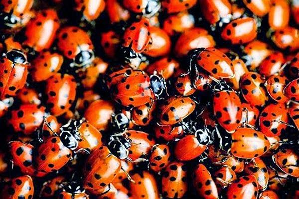Live beetles