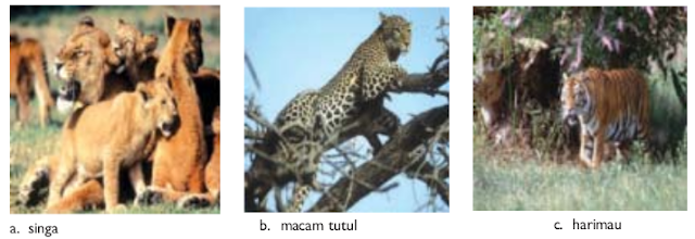 Spesies atau jenis ialah kelompok organisme yang sanggup melaksanakan perkawinan antara indiv Sejarah Pengelompokan Makhluk Hidup