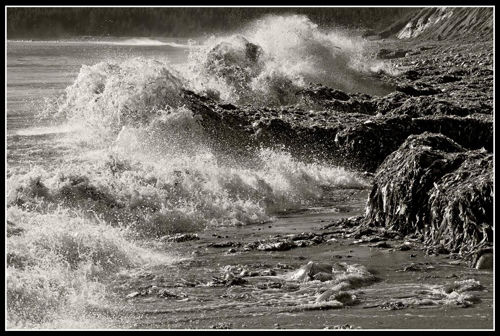 Nova Scotia; Hirtle's Beach; Rocks; Seaweed; Atlantic Ocean: Surf