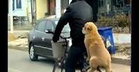 หมานั่งจักรยาน Dog on bicycle