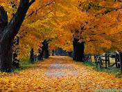 """""""Осень — это время года, сразу после которого начинается ожидание весны."""" Дуг Ларсон"""