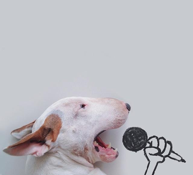 Brazilian Illustrator Rafael Mantesso and his dog Jimmy the Bull singing