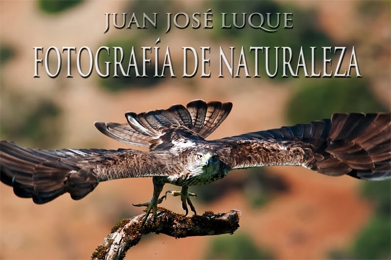 Juan Luque. Fotografía de Naturaleza.