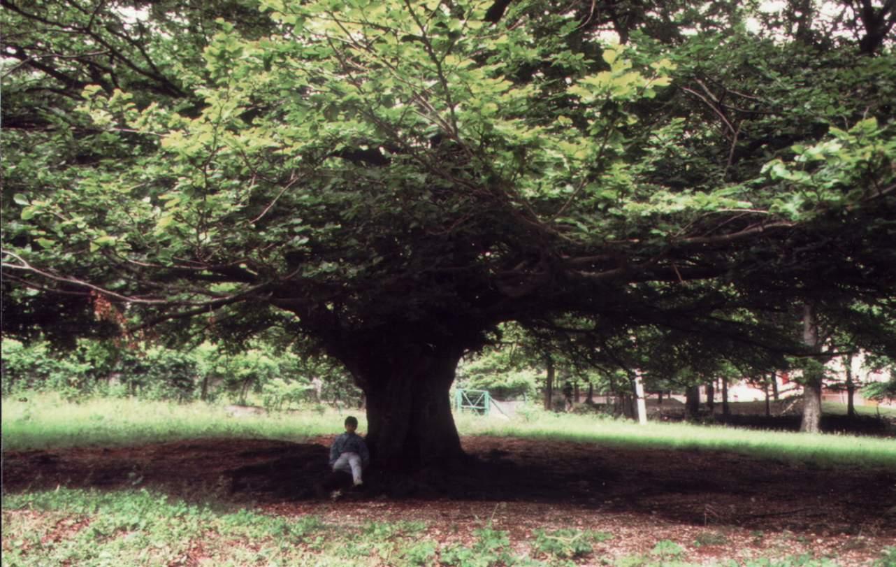 Quelli che parlano agli alberi a quante funzioni pu for Chioma albero