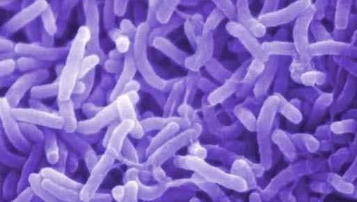 cara alami mengobati kolera