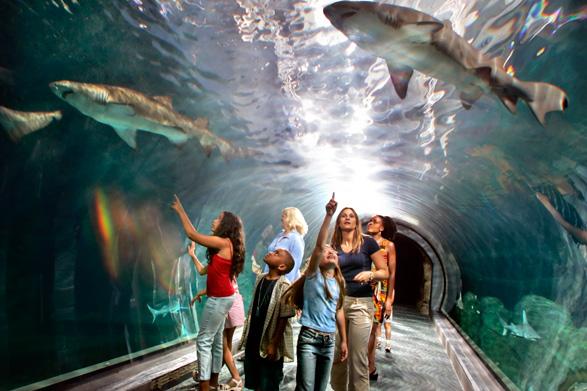 Adventure Aquarium Dreams Destinations