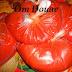 طريقة تحضير صلصة الطماطم و الاحتفاظ بها في المجمد