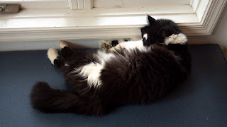cat sprawled out next to a window