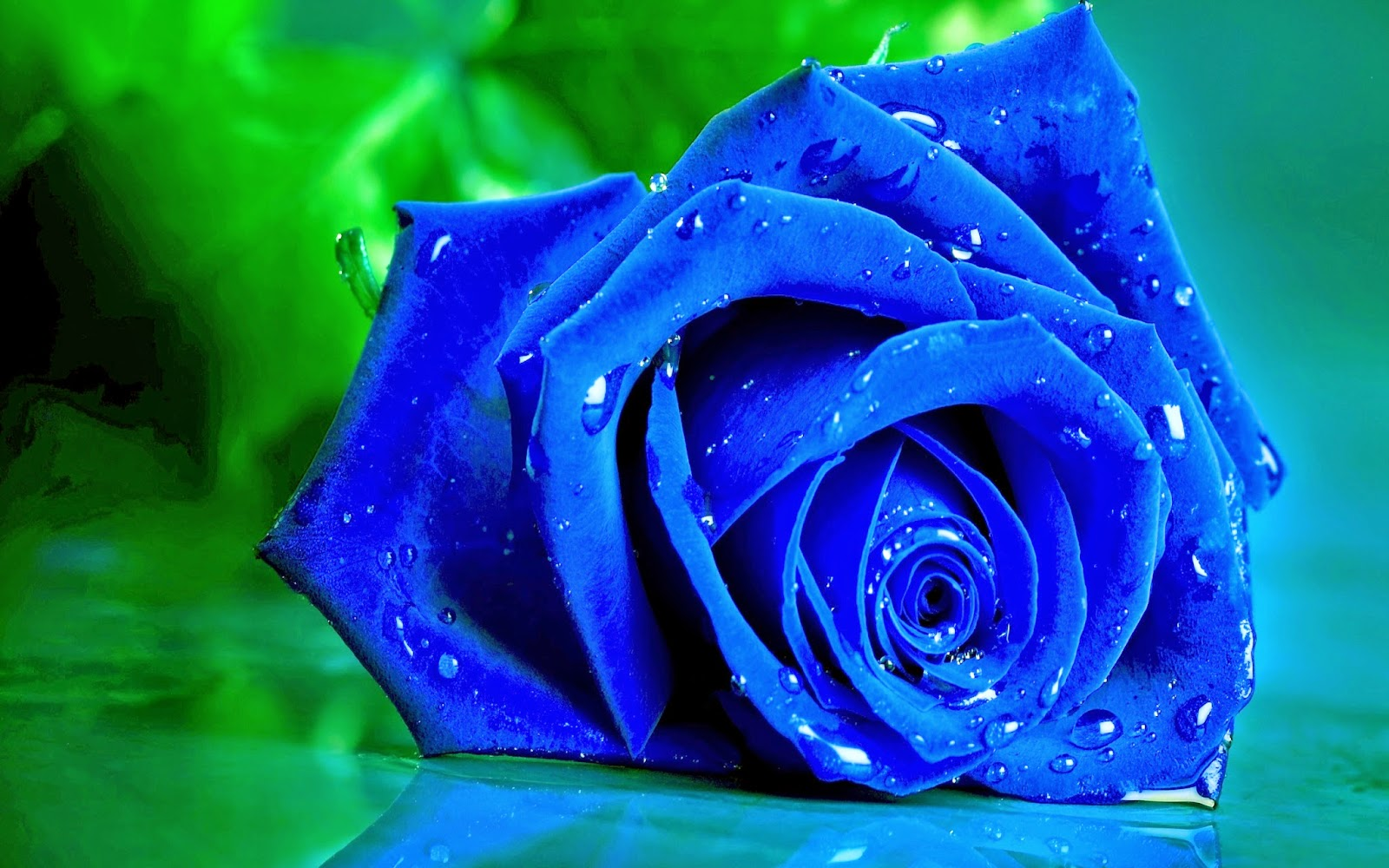 Blue And White Roses Meaning